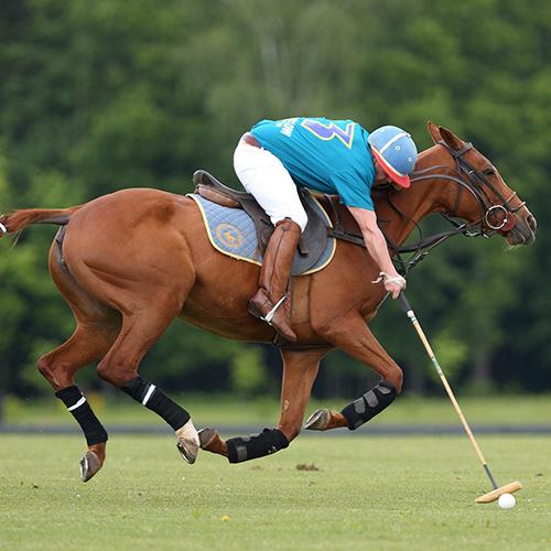 Спорт на лошадях 6 букв [PUNIQRANDLINE-(au-dating-names.txt) 38